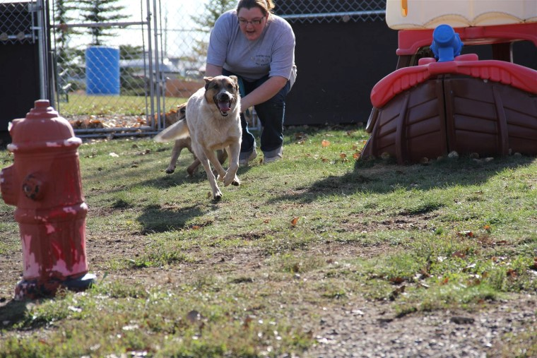 Our Facility Calgary Doggy Daycare Country Club Pet Resort