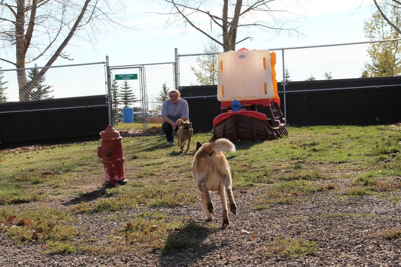 Gallery Calgary Pet Daycare Country Club Pet Resort
